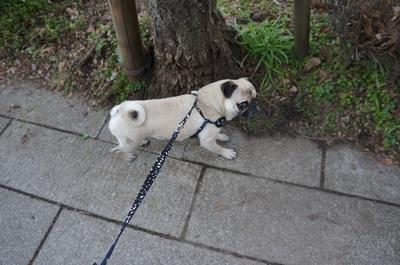 お散歩�@.JPG