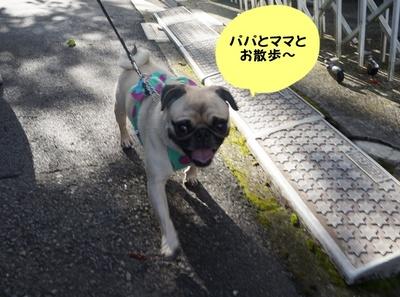 夏休み�@.JPG