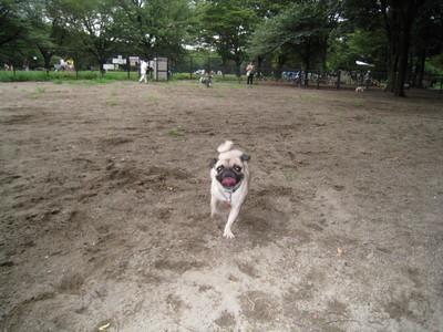 小金井公園�A.jpg