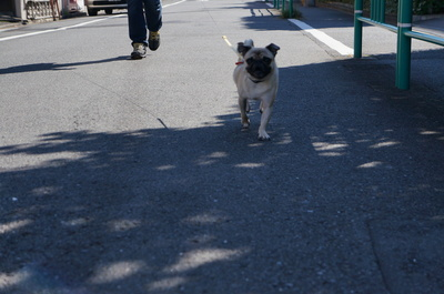デジ1お散歩.JPG